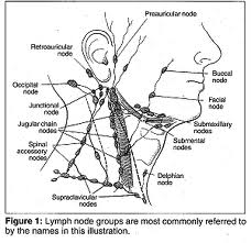 Head and Neck Lymph Nodes